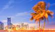 City of Miami Florida, night skyline  and palm trees