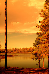 Golden light forest lake
