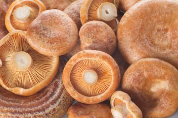 Textura de los lactarius deliciosus o níscalos frescos