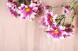 beautiful mum flowers on wooden background