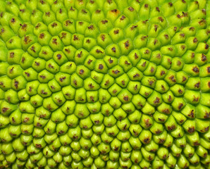 Jackfruit peel Background