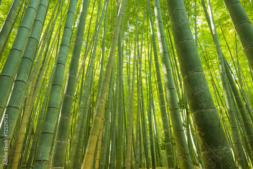 Canvas Bamboe Bamboo Forest in Japan. Bamboo Groove in Arashiyama, Kyoto.