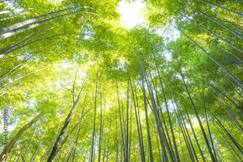 In de dag Bamboo Bamboo Forest in Japan. Bamboo Groove in Arashiyama, Kyoto.