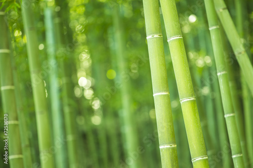 Foto op Canvas Bamboe Bamboo Forest in Japan. Bamboo Groove in Arashiyama, Kyoto.