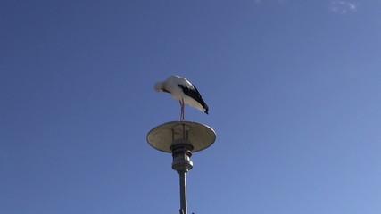 white stork (Ciconia ciconia) on sea beach coast lamp