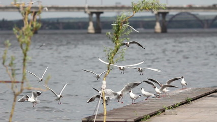 seagulls flying near the river