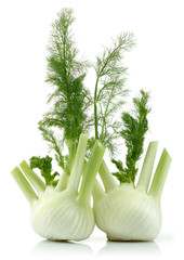 Two Fresh fennel