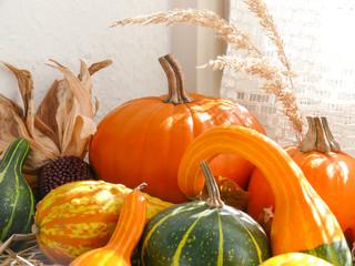 Pumpkin, Gourds and Corn in Window III