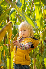 Portrait of curious child find corn in cornfield