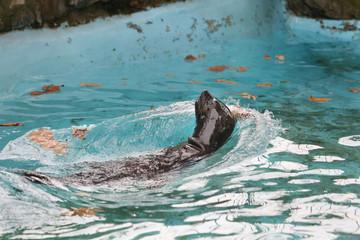 Seal Fur Animals Enjoying Their Environment