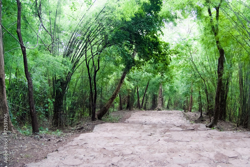 In de dag Bamboo A path into the woods