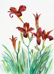 Red lilies background, watercolor composition.
