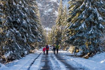 Droga przez las w górach