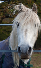 Pony in Wales