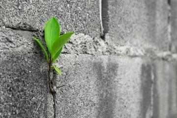 Close up Tree on brick wall