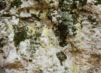 stone in the lichen