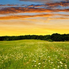 Blossoming spring meadow in the sunset