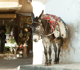 Donkey  on the street of the medina in Fez, Morocco.