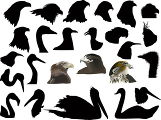 set of isolated on white bird heads