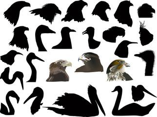 set of isolated on white bird heads
