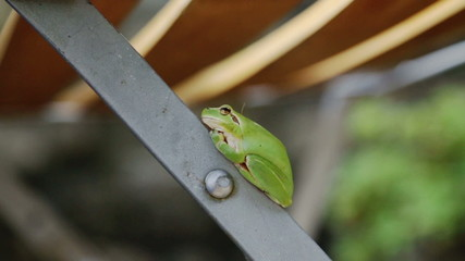 cute green frog in garden on chair
