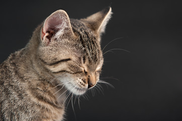 Katze mit geschlossenen Augen