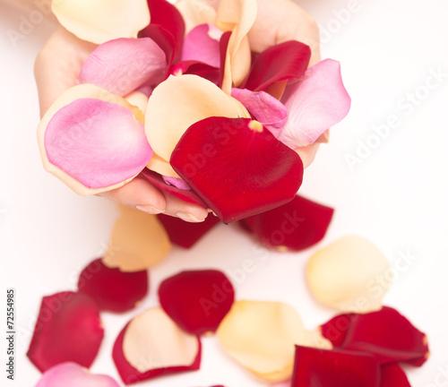 canvas print picture rose petals