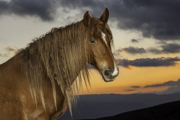 Ritratto di uno stallone contro il cielo al tramonto