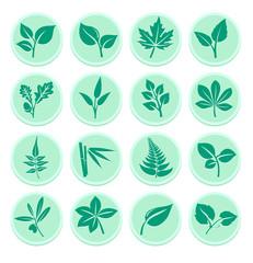 Green Leaf Flat Icons