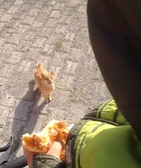 kedinin masum duruşu