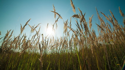 Green grass and blue clear sky with sun