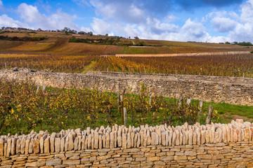 vignoble bourguignon en automne