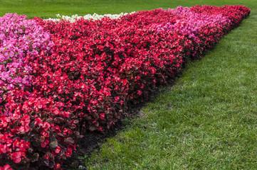Aiula di fiori in Budapest
