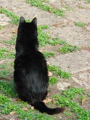 Gatto nero di spalle