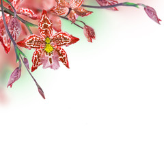 Floral background of tropical orchids