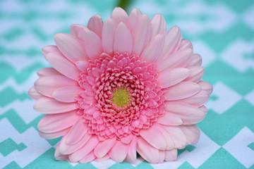 Prachtige licht roze gerbera op een modern tafellaken