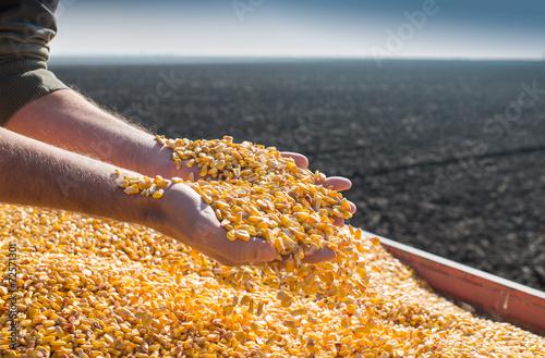 Leinwandbild Motiv Corn seed