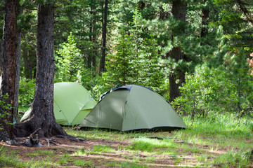 Greent tourist tents in forest at campsite