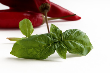 Basil leaves with red chillies