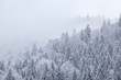 winter forest in snow and fog