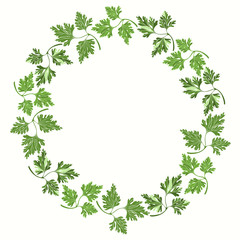Round frame with parsley on white background.  Hand drawn vector