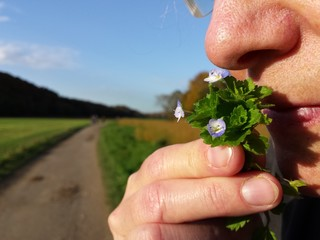 Riechen an kleinen Blüten am Wegesrand