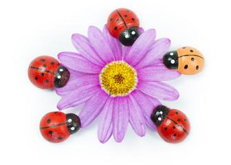 Wooden ladybirds with purple flower