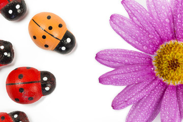 Wooden ladybirds with purple flower