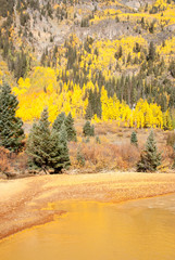 Fall colors of Colorado