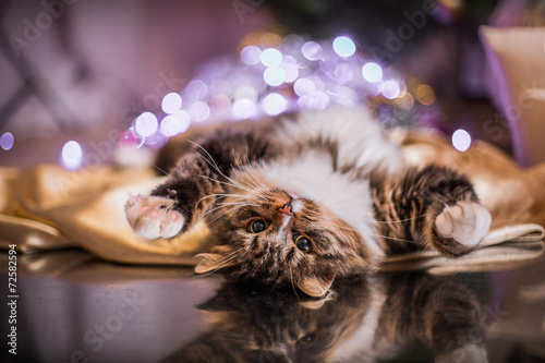 tabby cat plays, paw, holiday - 72582594