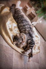 cat, new year holidays, christmas, christmas tree