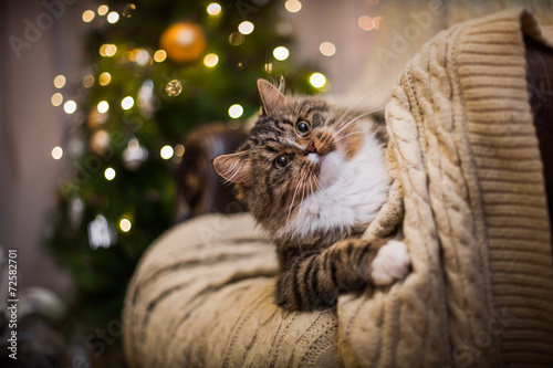 Staande foto Kat cat, new year holidays, christmas, christmas tree
