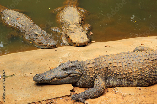 Foto op Plexiglas Krokodil Crocodile in the nature