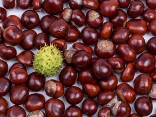 chestnut006
